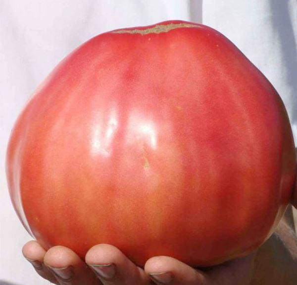 """Внешний вид плодов помидора """"Воловье Сердце"""""""
