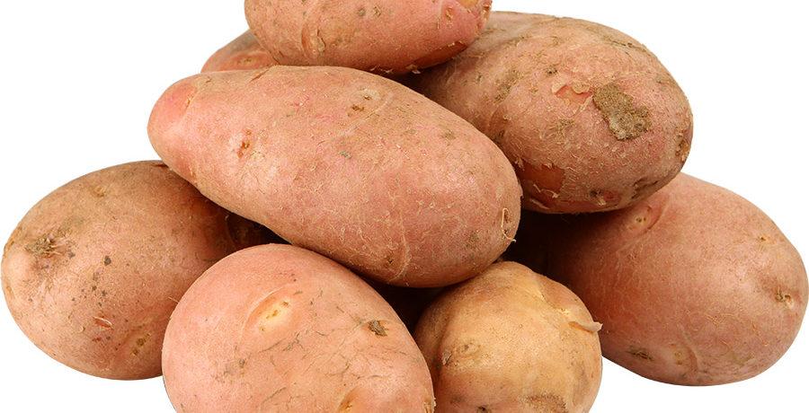Клубни красного картофеля