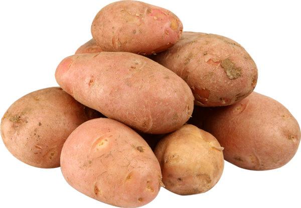 Красный картофель: описание разновидности, сорта