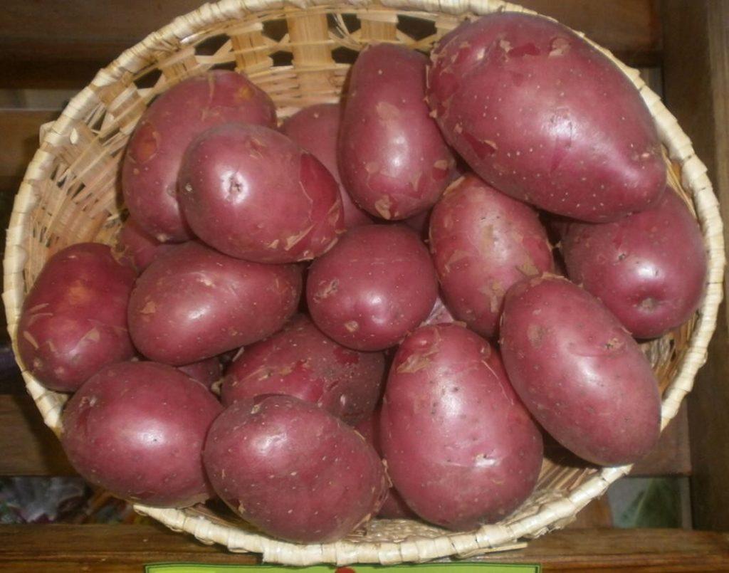 Красная картошка в корзине