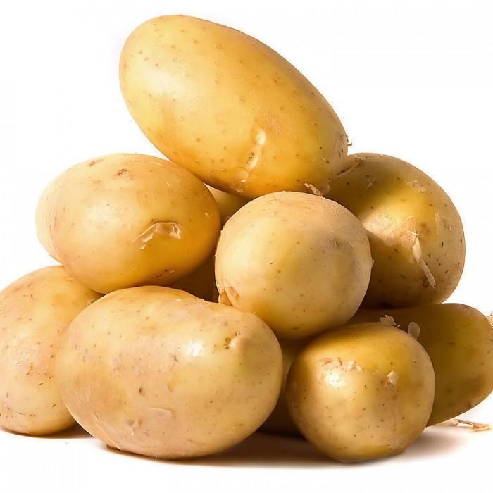 Сорт картошки Одиссей