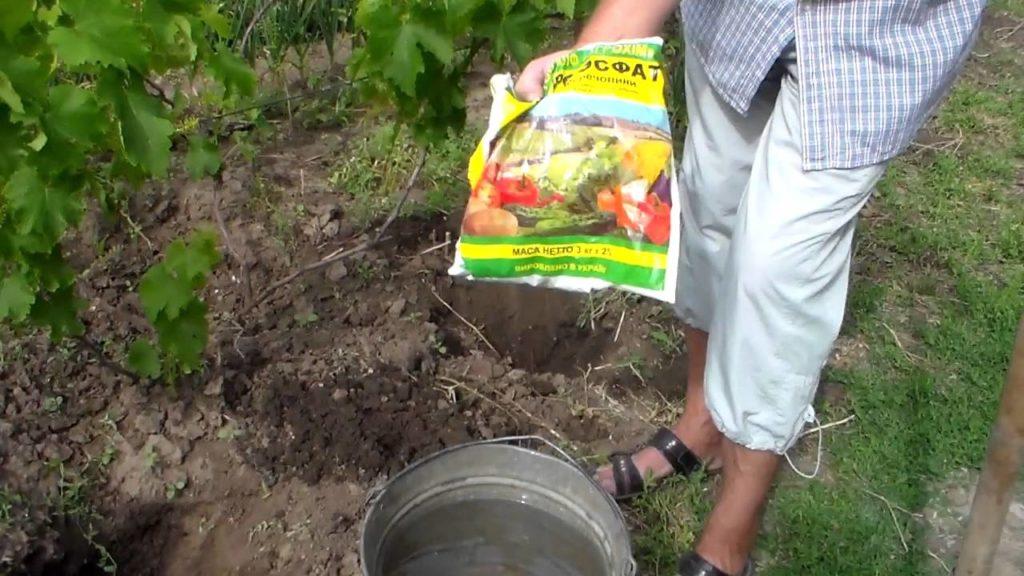 Подкормка винограда в межсезонье