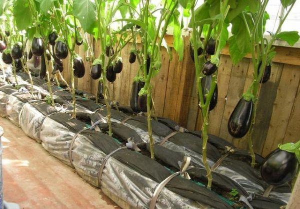 Пасынкование - это удаление на растении лишних боковых побегов и листвы