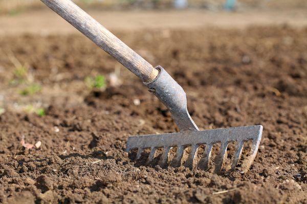Залог хорошей зимовки – правильно подготовленная почва