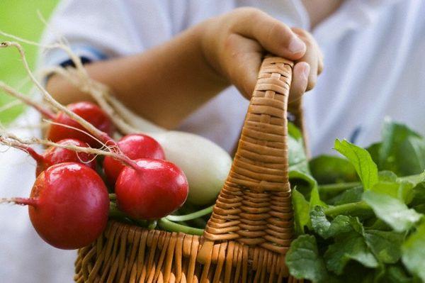 Редис является одним из первых весенних овощей
