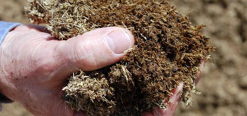 Весной под куст выкладывают компост или перегной