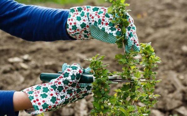 Садовые ножницы для обрезки должны быть острыми