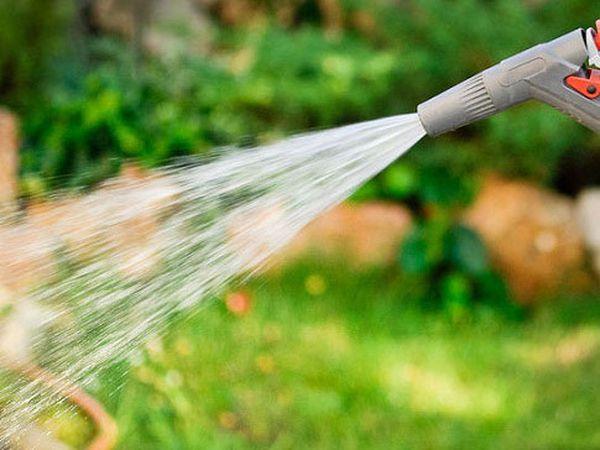 Своевременный полив в сухую погоду увеличит урожай