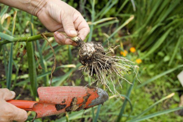 Своевременная посадка - обеспечит хороший урожай