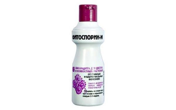 Для профилактики заболевания подходит Фитоспорин М