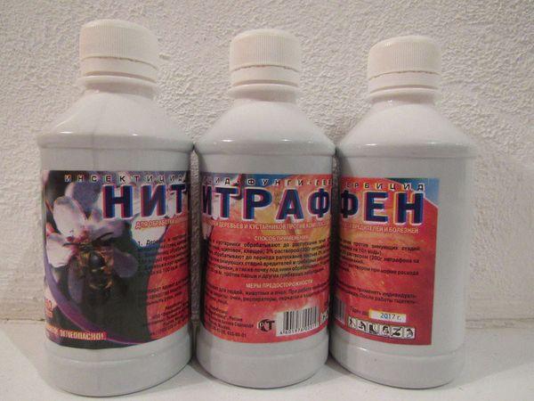 Нитрафен - препарат от мучнистой росы