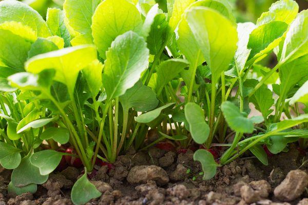 Растение требует качественного ухода