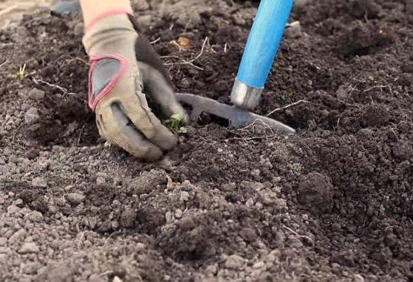 Все растения любят качественный и плодородный грунт