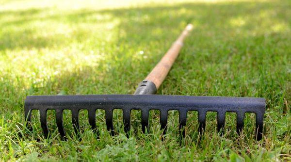 Перед посадкой необходимо подготовить почву