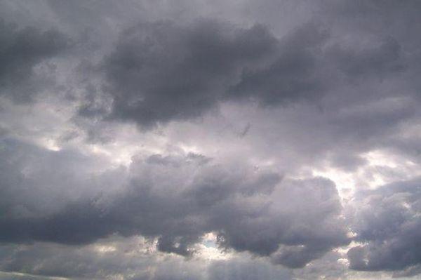 Пасмурная погода идеально подходит для посадки крыжовника
