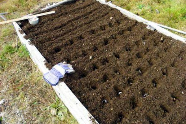 Подготовка почвы к посадке чеснока