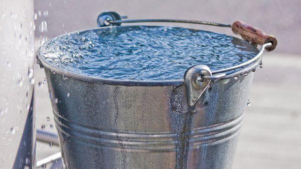 Кусты смородины и крыжовника поливают утром или вечером