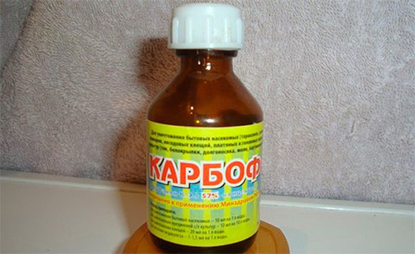 Карбофос - средство от тли