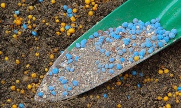 Минеральные удобрения для чеснока