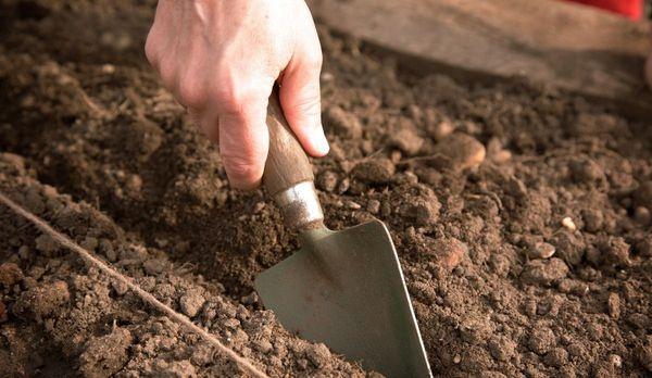 Подготовка грунта к посадке чеснока