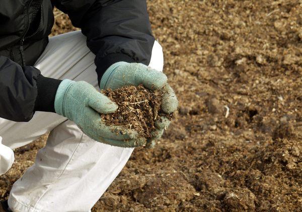 Почву удобряют навозом или перегноем