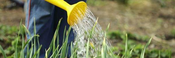 Правильный полив - залог хорошего урожая