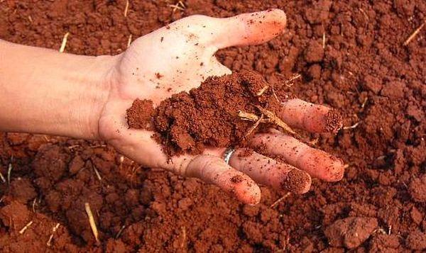 В глинистую почву рекомендуется добавлять песок