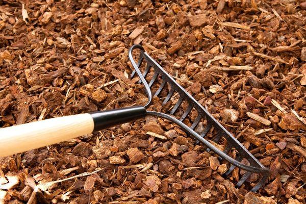 Мульчирование почвы повысит урожайность чеснока