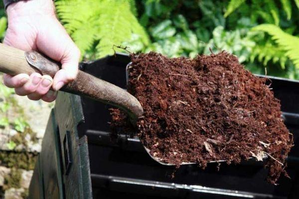 В посадочную яму нужно добавить 2 кг перегноя