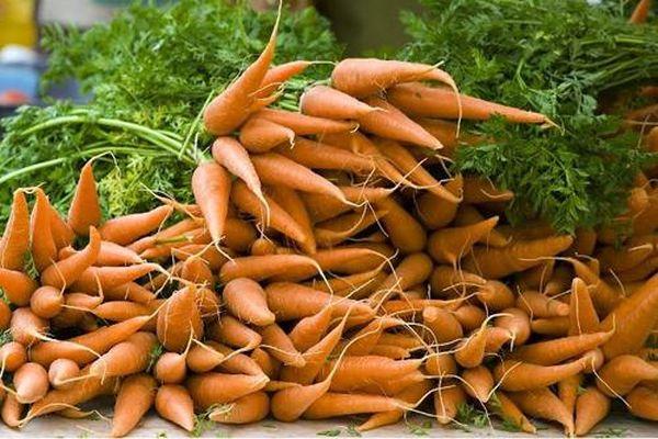 Морковь насыщенна полезными веществами
