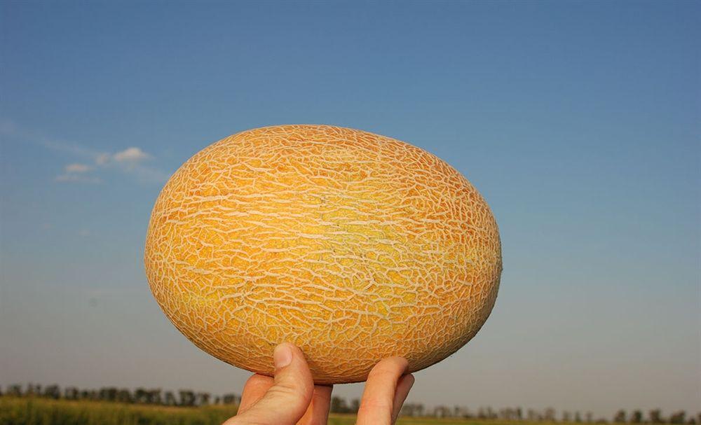 Плоды созревают через 5–60 дней со дня посева
