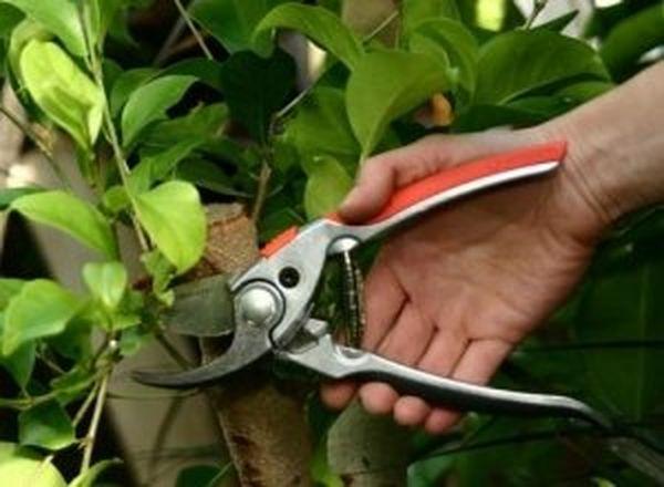 Качественная обрезка - залог формирования правильной кроны яблони