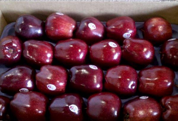 Собирают яблоки Ред Делишес с сентября по октябрь