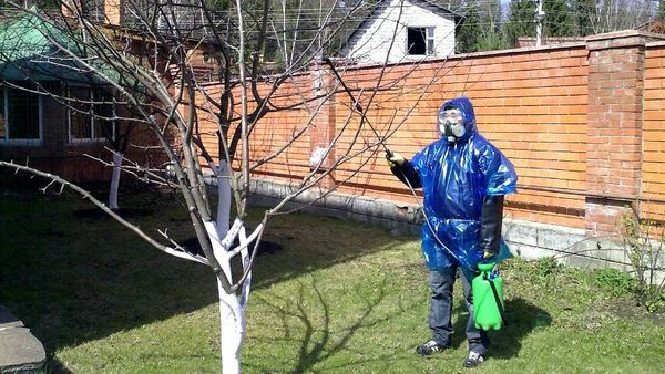 Обрабатывать яблоню от парши нужно в средствах индивидуальной защиты