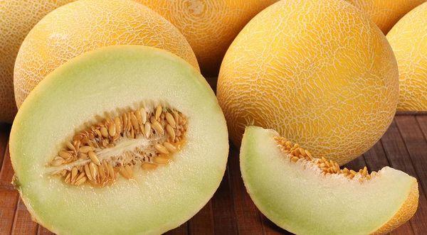 Плоды дыни Колхозница весят около 2 килограмм