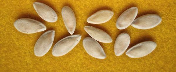 Высевают семена сорта Принцесса Светлана в мае