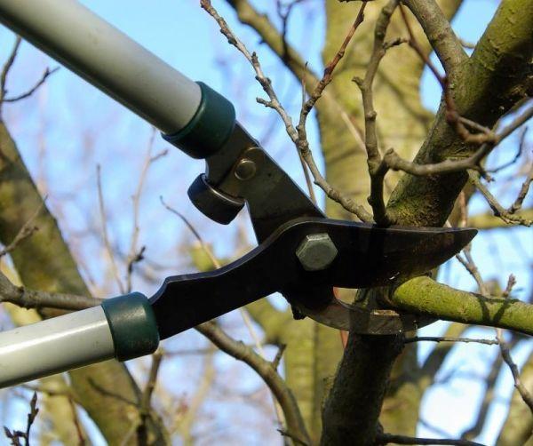 Обрезка вишни бывает санитарной и формирующей
