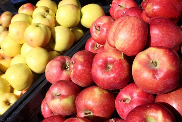 Правильная посадка поможет избежать снижения урожайности яблонь