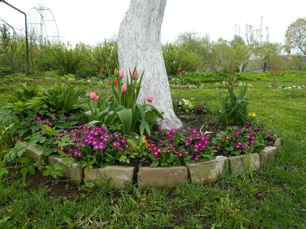 Цветочные клумбы под деревьями украсят любой сад