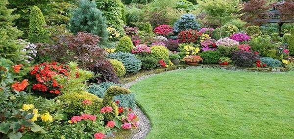 Кустарниковые растения лучше не сажать под деревьями
