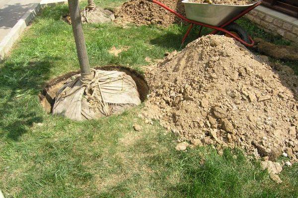 Высаживать саженцы вишни в грунт рекомендуют в весенний период