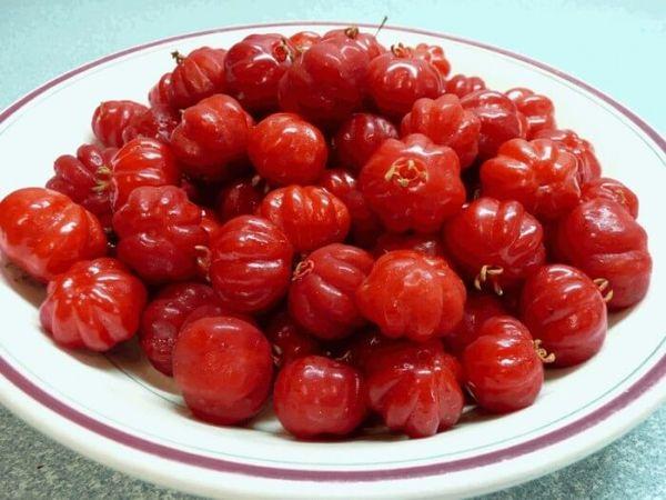 Плоды дерева богаты клетчаткой, витаминами и минералами