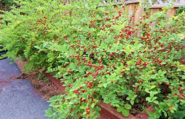 Органические удобрения вносят осенью