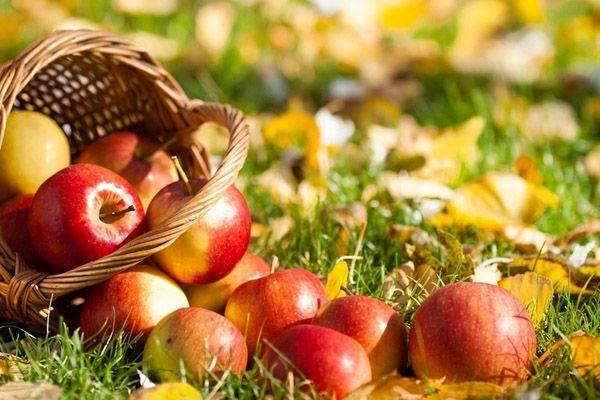 Каждый сорт яблока обладает уникальным вкусом