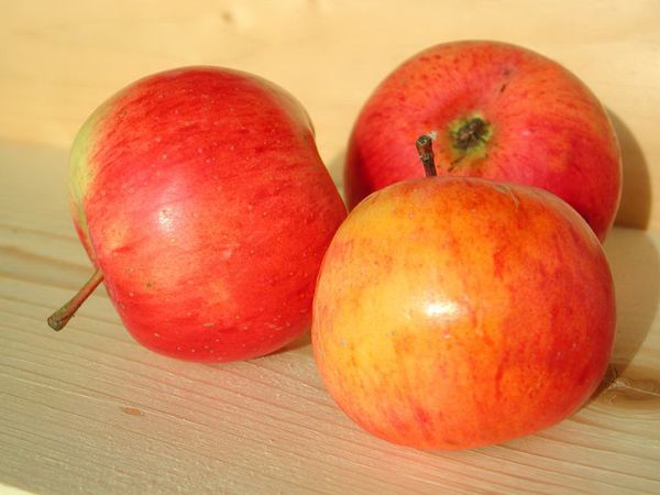Плоды Ауксис в среднем весить 90–140 грамм
