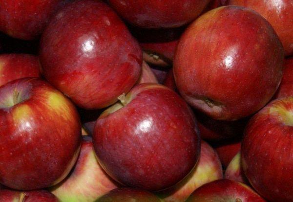 Сорт Беркутовское плодоносит среднего размера фруктами