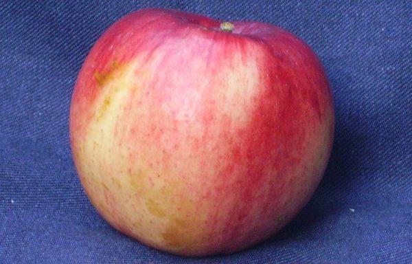 С 1 дерева можно собрать до 70 кг яблок