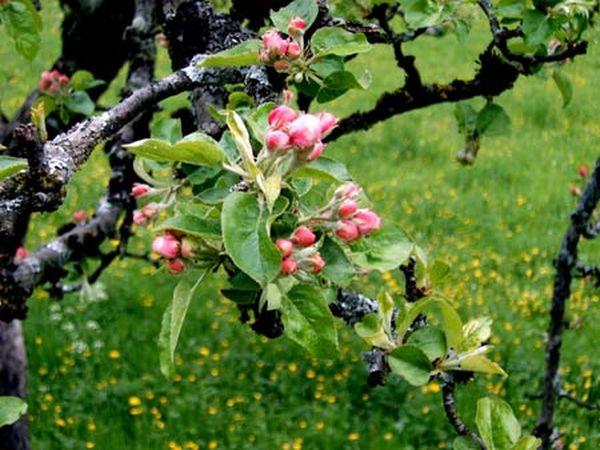 Цветы во время цветения розовые или белые
