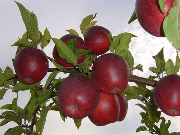 В каждом фрукте велико содержание витаминов В, С, Е, К