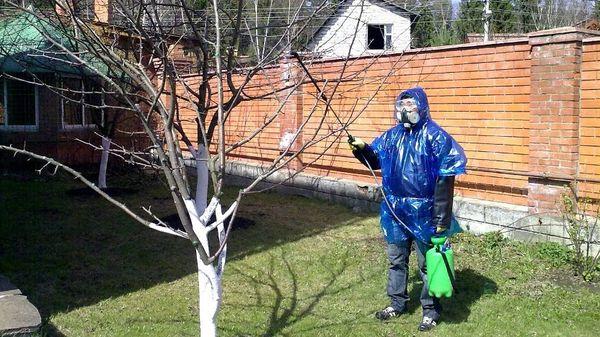 Весной яблоню необходимо обрабатывать